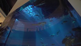 Dubai Aquarium and Under Water Zoo in the shopping mall`s interior Dubai Mall stock footage video. Dubai, UAE - April 09, 2018: Dubai Aquarium and Under Water stock video footage