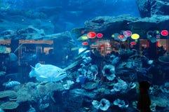 Dubai Aquarium & Underwater Zoo. Located in The Dubai Mall, is the largest suspended aquarium in the world stock photo