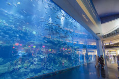 Dubai aquarium & underwater zoo. In the largest shopping center in the world, dubai mall with 2.000 shops, united arab emirates (UAE stock image