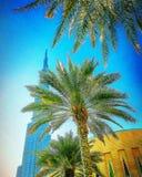 Dubai architecture. Palm tress nature architecture Stock Image