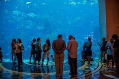 Dubai - AUGUST 7, 2014: Dubai Mall Aquarium on August 7 in Dubai Royalty Free Stock Photography