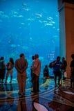 Dubai - AUGUST 7, 2014: Dubai Mall Aquarium on August 7 in Dubai Stock Photo