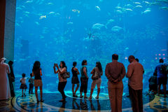 Dubai - AUGUST 7, 2014: Dubai Mall Aquarium on August 7 in Dubai Stock Photos