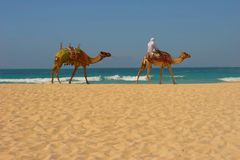 DUBAI BEACH Royalty Free Stock Images