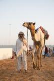 Dubai camel racing club camel and keeper. Dubai camel racing club camel and young keeper royalty free stock photos
