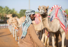 Dubai camel racing club camels waiting to race with keeper. Royalty Free Stock Images