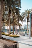 Dubai, the city`s streets. road and a lot of palm trees. Dubai, the city`s streets. the road and a lot of palm trees royalty free stock photos
