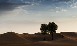 Dubai desert. With beautiful sandunes and tree royalty free stock images