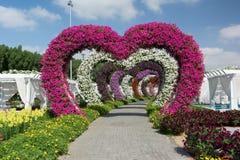 DUBAI FÖRENADE ARABEMIRATEN - DECEMBER 8, 2016: Den Dubai mirakelträdgården är den största naturliga blommaträdgården i världen Arkivfoto