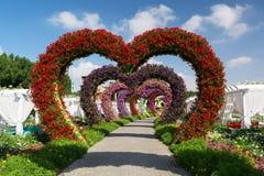 DUBAI FÖRENADE ARABEMIRATEN - DECEMBER 8, 2016: Den Dubai mirakelträdgården är den största naturliga blommaträdgården i världen Royaltyfri Foto