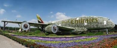 DUBAI FÖRENADE ARABEMIRATEN - DECEMBER 8, 2016: Den Dubai mirakelträdgården är den största naturliga blommaträdgården i världen Fotografering för Bildbyråer