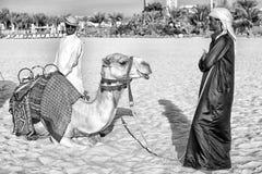 DUBAI kamel på skyskrapabakgrund på stranden Stil för strand för marina JBR för UAE Dubai: kamel och skyskrapor arkivbilder