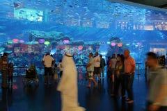 Dubai Mall Aquarium Stock Photos