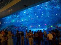 Dubai mall aquarium Stock Images