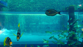 Dubai Mall Aquarium Royalty Free Stock Photography
