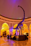 Dubai Mall The Biggest Shopping Mall in the World UAE. Dinasour Skeleton at the World`s biggest shopping mall in Dubai UAE Stock Images