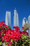 Dubai marina med blommor mot skyskrapor i Dubai, Förenade Arabemiraten Fotografering för Bildbyråer