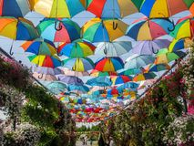 Dubai Miracle garden beautiful artistic decorations royalty free stock images