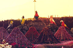 Dubai Miracle Garden. Is the biggest natural flower garden in the world with wide variety of different flowers arranged in shapes of hearts, stars, igloos Royalty Free Stock Images