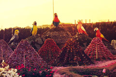 Dubai Miracle Garden. Is the biggest natural flower garden in the world with wide variety of different flowers arranged in shapes of hearts, stars, igloos Stock Images
