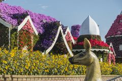 Dubai miracle garden. With over million flowers on sunny day stock photo
