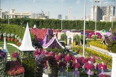 Dubai miracle garden. With over million flowers on sunny day Stock Photos