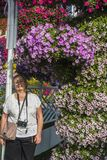 Dubai miracle garden. With over million flowers on sunny day royalty free stock images