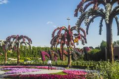 Dubai miracle garden. With over million flowers on sunny day Stock Photography