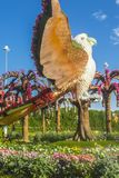 Dubai miracle garden. With over million flowers on sunny day Royalty Free Stock Photos