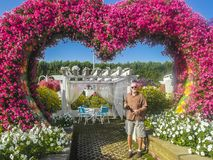 Dubai miracle garden. With over million flowers on sunny day .  The man stands among the flowers Stock Photo