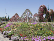 Dubai Miracle Garden royalty free stock image