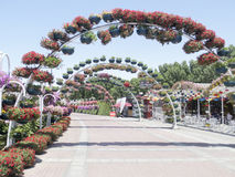 Dubai Miracle Garden royalty free stock photography