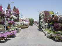Dubai Miracle Garden royalty free stock photo