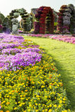 Dubai Miracle Garden Flowers. And Arcs Royalty Free Stock Image