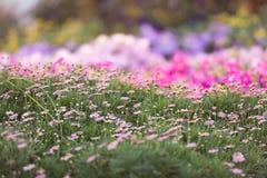 Dubai miracle garden Royalty Free Stock Photo