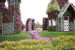 Dubai Miracle garden. Located in the desert Stock Photography
