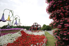 Dubai Miracle garden. Located in the desert Stock Images
