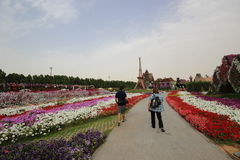 Dubai Miracle Garden. Located in the desert Stock Photos