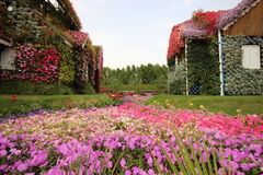 Dubai Miracle Garden. Located in the desert Stock Photo
