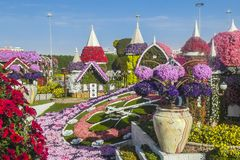 Dubai miracle garden. With over million flowers on sunny day . Big clock with flowers Stock Photography