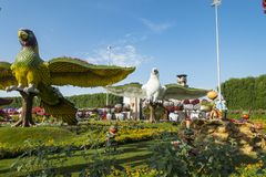 Dubai miracle garden. With over million flowers on sunny day Stock Images