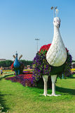 Dubai miracle garden with over million flowers Royalty Free Stock Photos