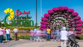 Dubai miracle garden timelapse with over 45 million flowers in a sunny day, United Arab Emirates stock video footage