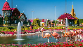 Dubai miracle garden timelapse with over 45 million flowers in a sunny day, United Arab Emirates. Lake with fountain and flamingo at Dubai miracle garden stock video footage