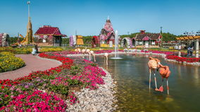 Dubai miracle garden timelapse with over 45 million flowers in a sunny day, United Arab Emirates stock footage