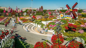 Dubai miracle garden timelapse with over 45 million flowers in a sunny day, United Arab Emirates. Top view of Dubai miracle garden timelapse with over 45 million stock video