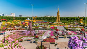 Dubai miracle garden timelapse with over 45 million flowers in a sunny day, United Arab Emirates. Top view of Dubai miracle garden timelapse with over 45 million stock footage