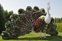 Dubai Miracle Garden in the UAE. It contains over 45 million flowers Royalty Free Stock Photo