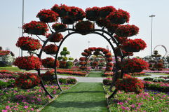 Dubai Miracle Garden in the UAE Stock Photography
