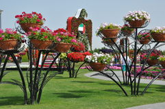 Dubai Miracle Garden in the UAE Stock Photos